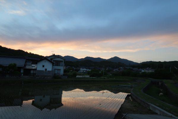 田んぼに映る夕焼け